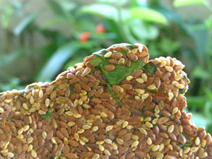 Galletas Saladas Crudiveganas Texmex