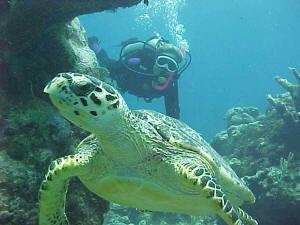 Mochima Refugio de Tortugas Carey en peligro