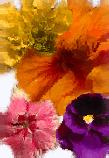 Flores Comestibles en la cocina